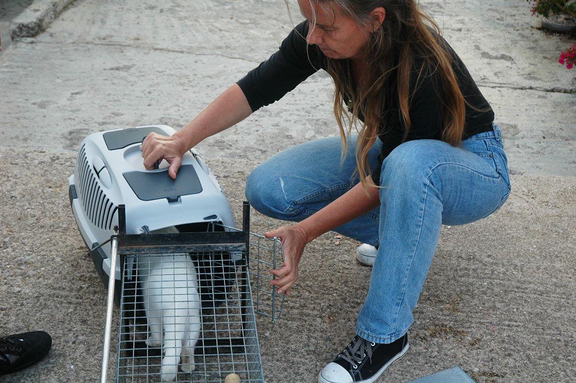 Irene aan het katten vangen.