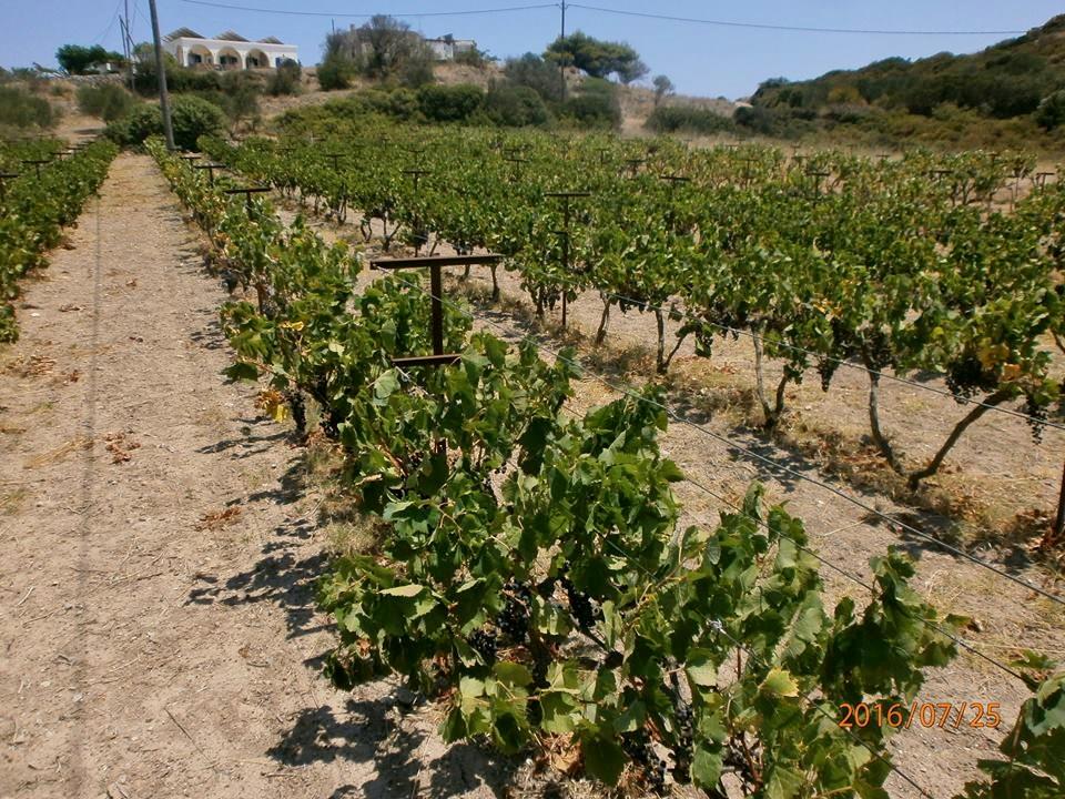 Winery Firrogi