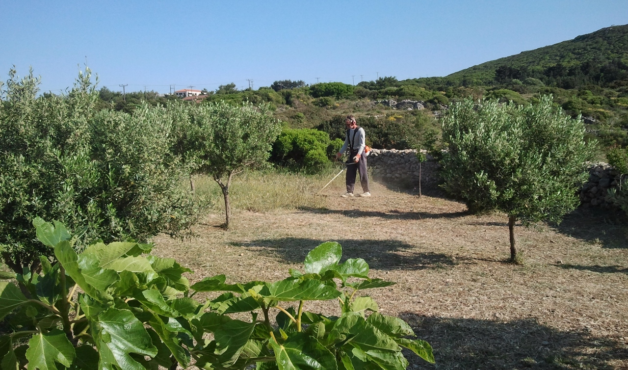 De boomgaard in mei 2015. Regelmatig maaien hoort erbij. Foto uit eigen archief.