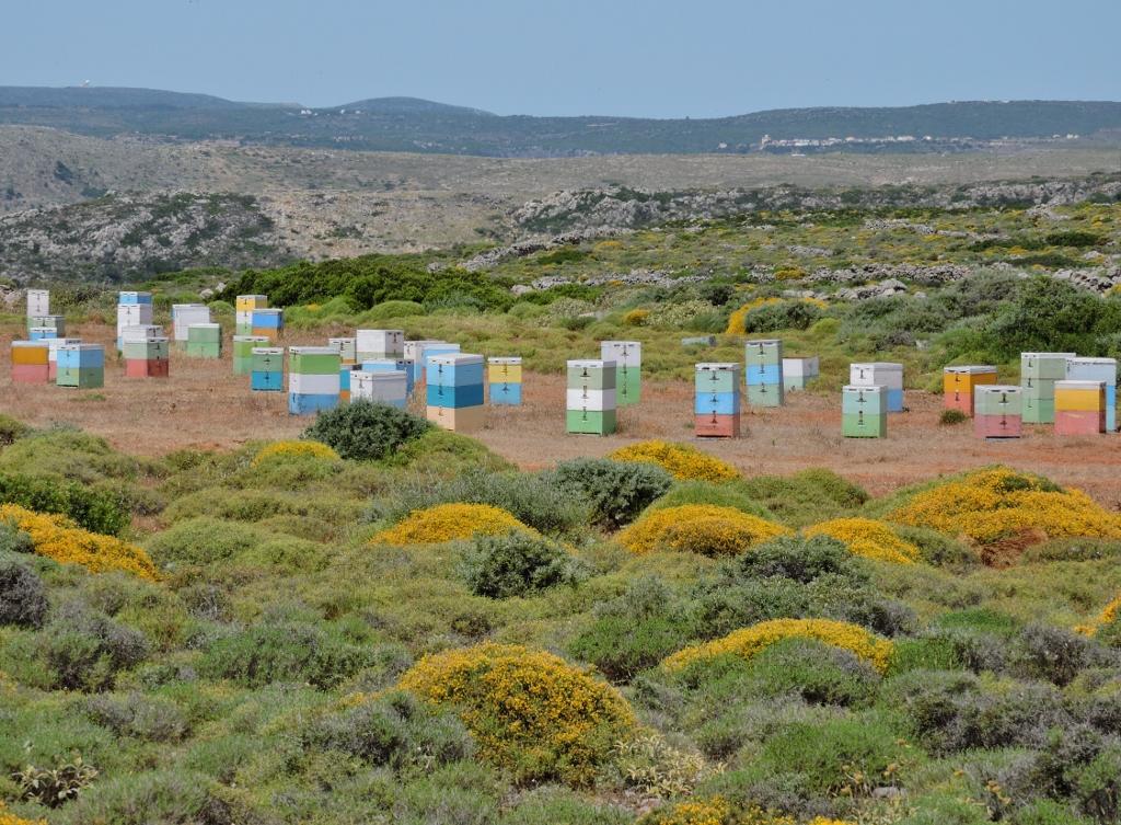 Hier wordt de beroemde tijmhoning  van Kythira 'gemaakt'. Deze kleurige bijenkorven zie je overal op het eiland.  Waar tijm is...De foto is van Christina.