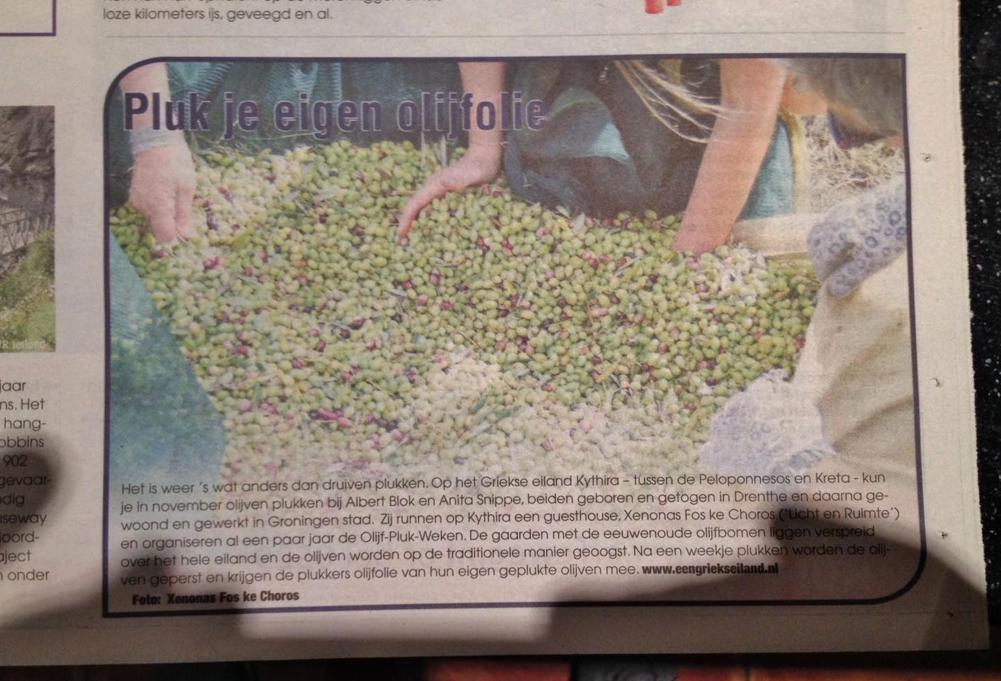 Pluk je eigen olijfolie, de olijf-pluk-weken op Kythira