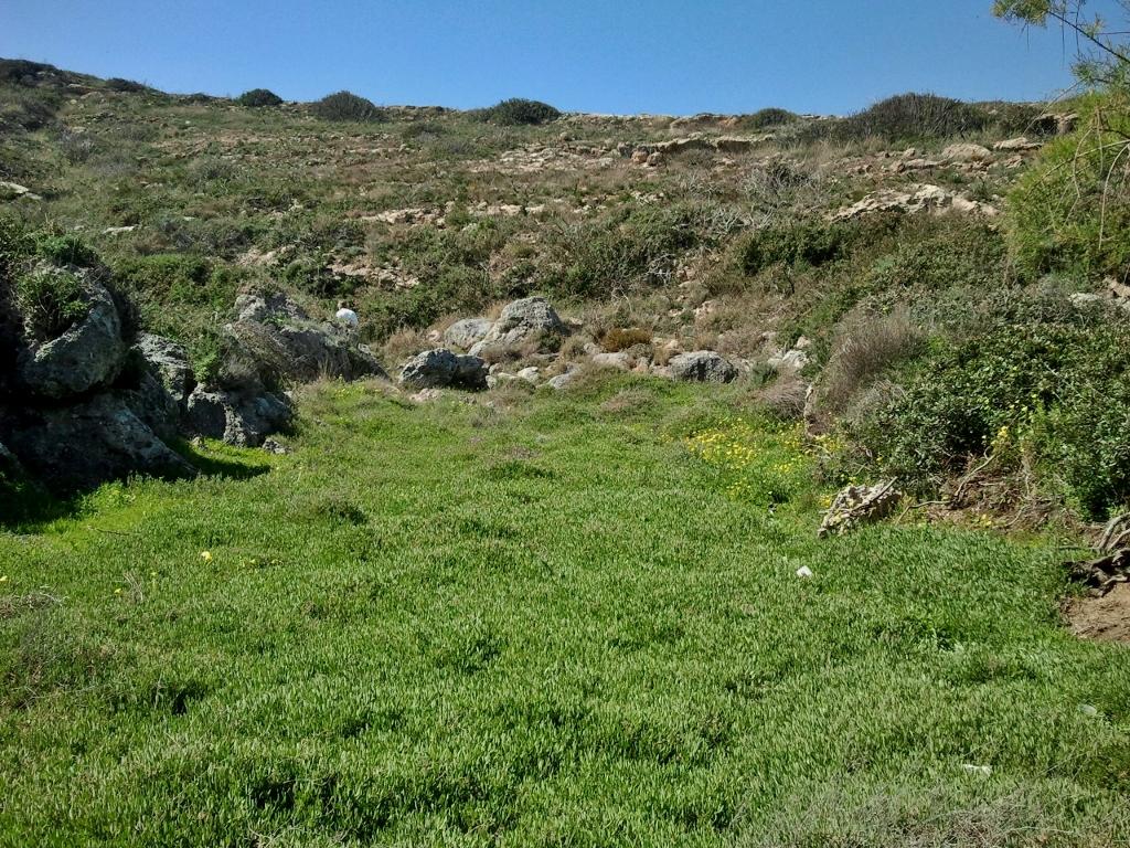 Eetbare wilde planten kritamos