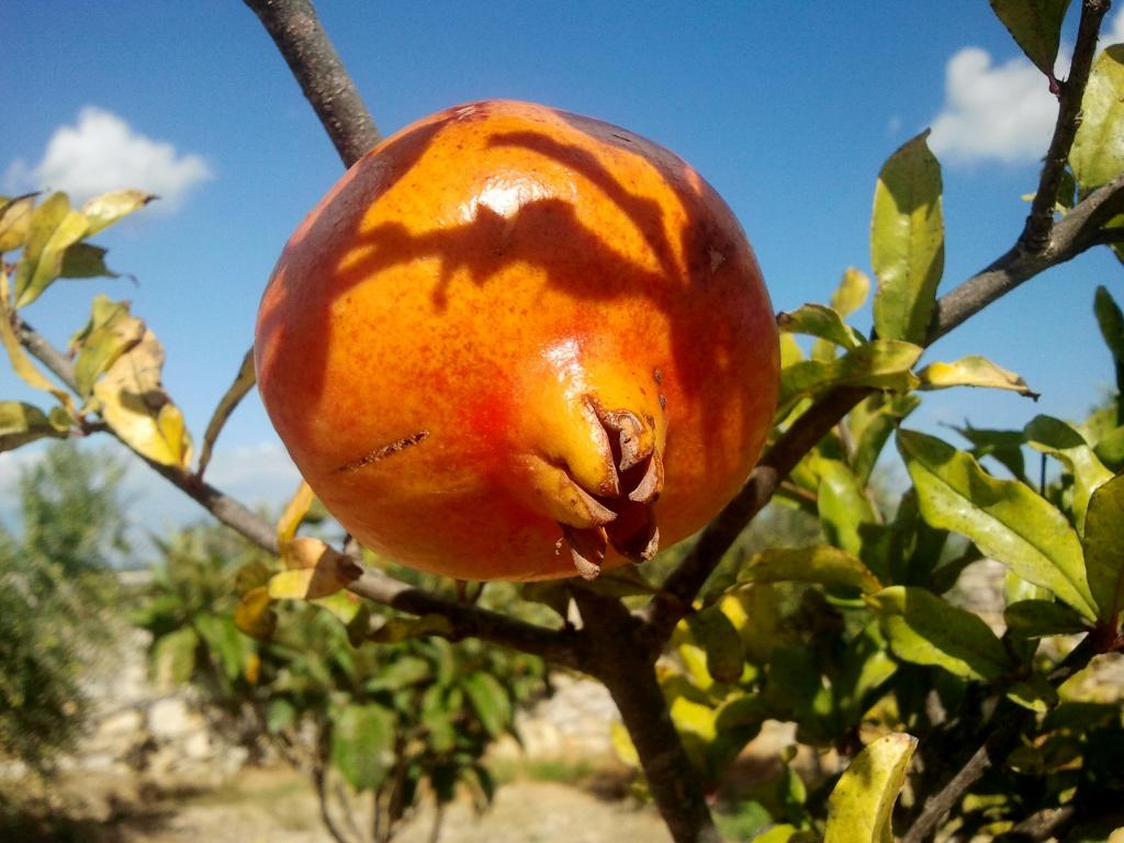 De granaatappel