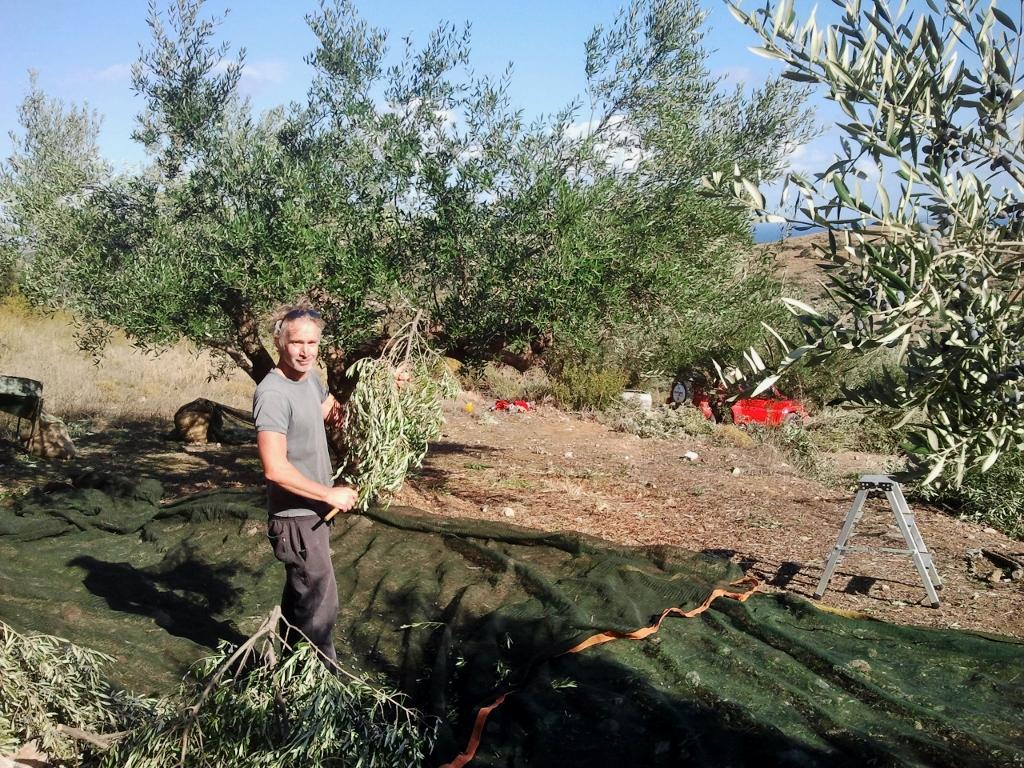 Een andere vakantie, olijven plukken op Kythira